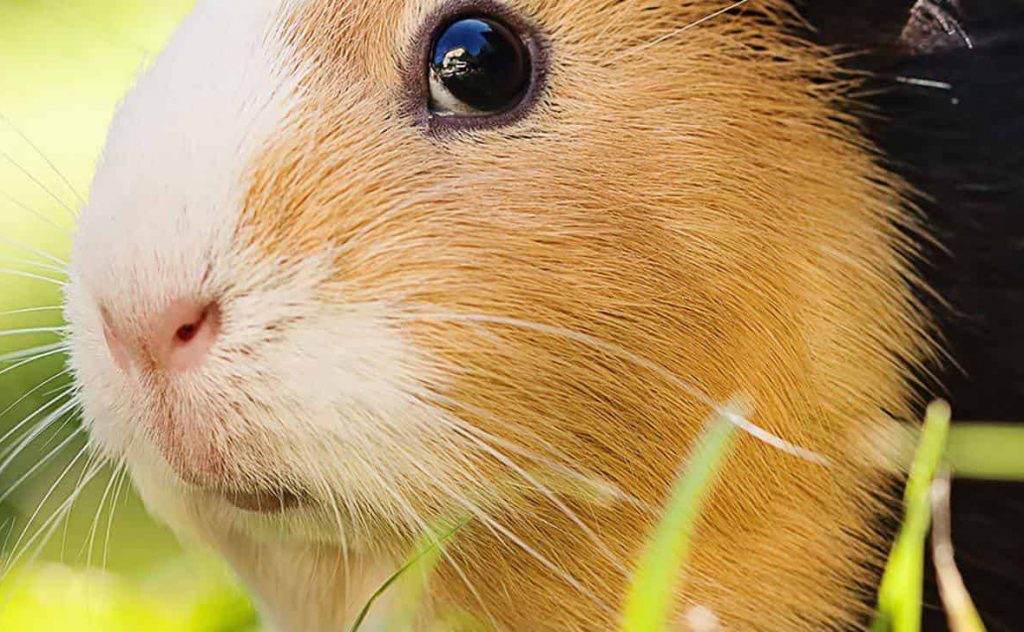 Vets for Rabbits, Birds & Other Exotic Pets - The Unusual