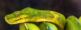 Veterinary Services for Reptiles, Birds and Small Mammals