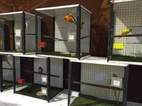 Avicultural Society Bird Expo!