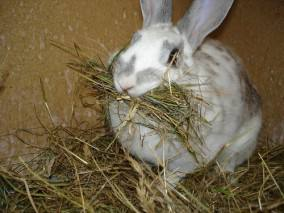 How to Encourage your Rabbit to Eat More Hay