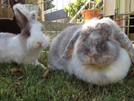 Spring is here, and so are the insects – Its time to vaccinate our rabbits!