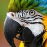 Bird Vet Avian Vet