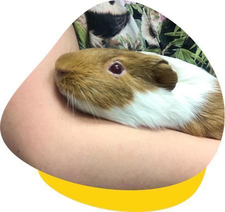 Ana guinea pig case