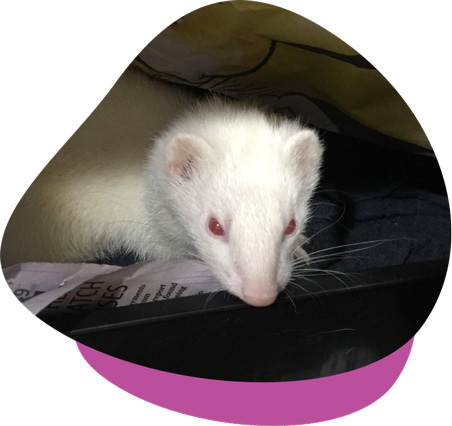 Princess ferret page