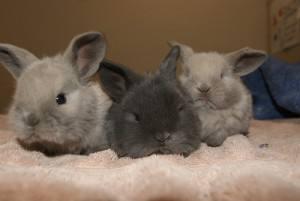 Cutest-rabbits-3