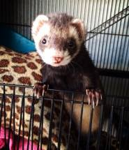 5 Rules to Keeping Exotic Pets