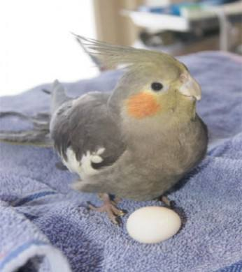 Help My Hormonal Parrot!