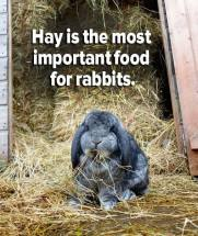 """Rabbits need to chew on wood right?"" Dispelling owner myths about rabbit dental disease"