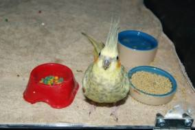 PET OF THE MONTH – August 2015
