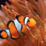 Fish bg