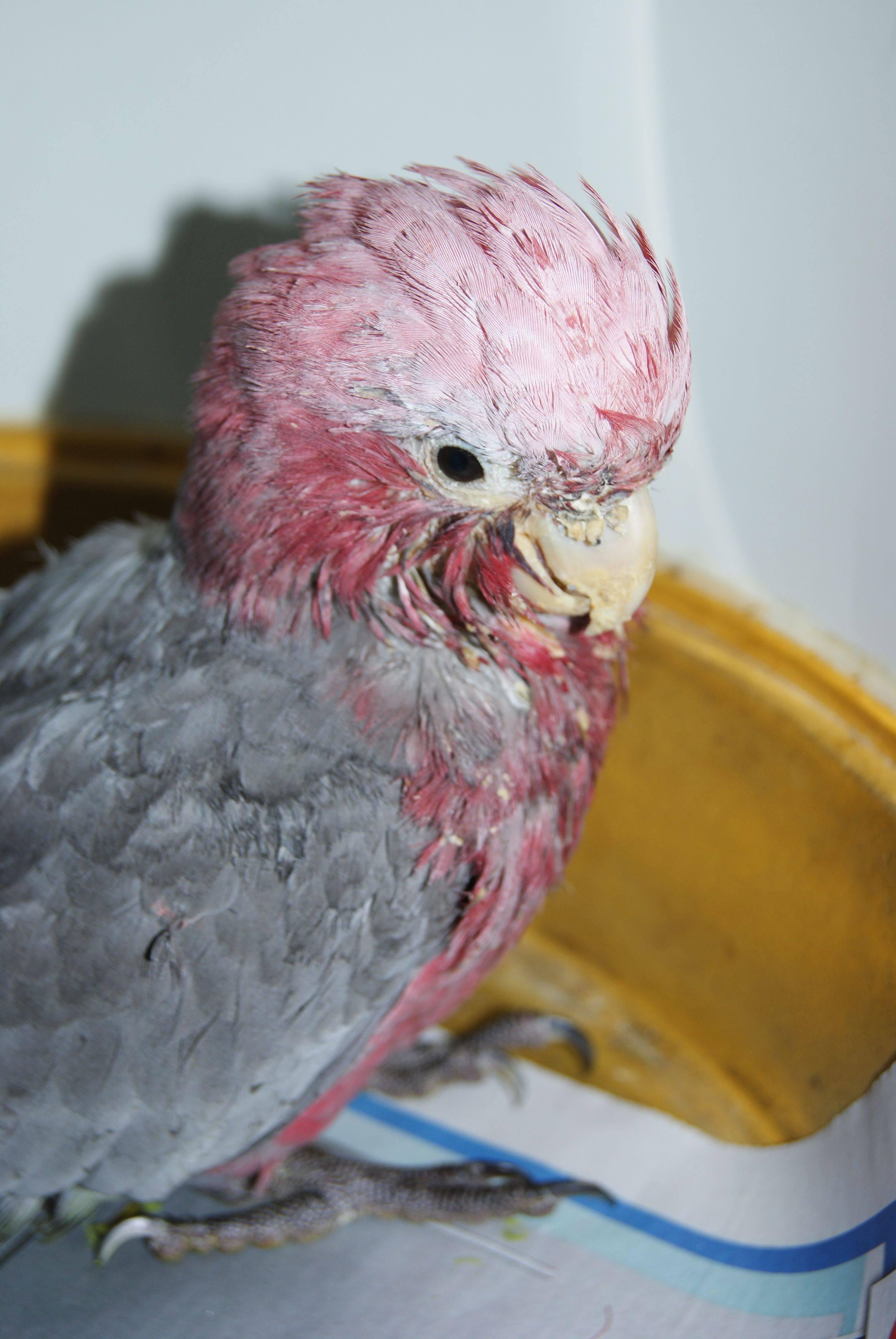 avian bird vet perth bird vet avian vet the unusual pet vets. Black Bedroom Furniture Sets. Home Design Ideas