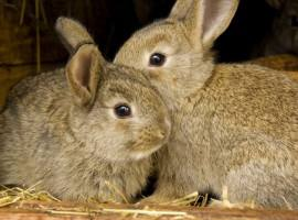 Two rabbits are better than one. Unusual Pet Vets
