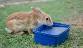 Rabbits need to stay hydrated