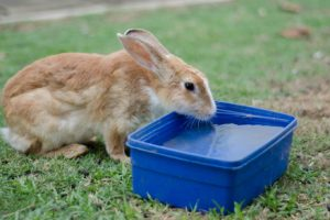 Tips to keep Guinea Pigs & Rabbits Cool this Summer