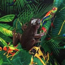 Do you have an amphibian? Lots of information here :)
