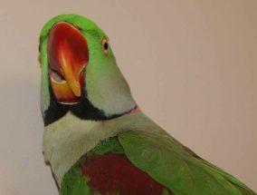 Jacque Beak