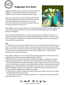 Budgie-Care-Sheet.pdf