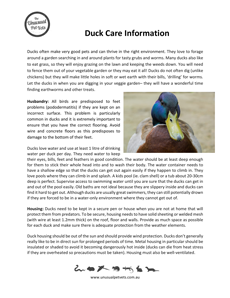 Duck-Care-Sheet.pdf