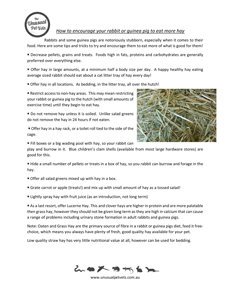 How-to-get-your-rabbit-and-guinea-pig-to-eat-more-hay.pdf