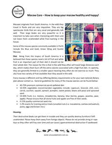 Macaw-Care-Sheet.pdf