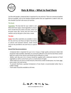 Rats and Mice Feeding Guide