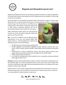 Ringneck-and-Alexandrine-Care-Sheet.pdf