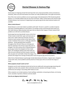 Dental-Disease-in-Guinea-Pigs.pdf