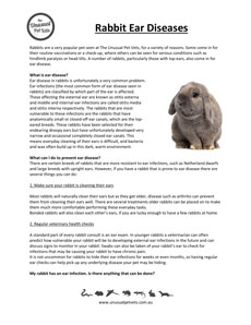 Rabbit Disease Information | The Unusual Pet Vets