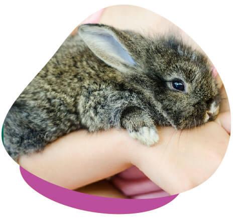 baby rabbit cuddle