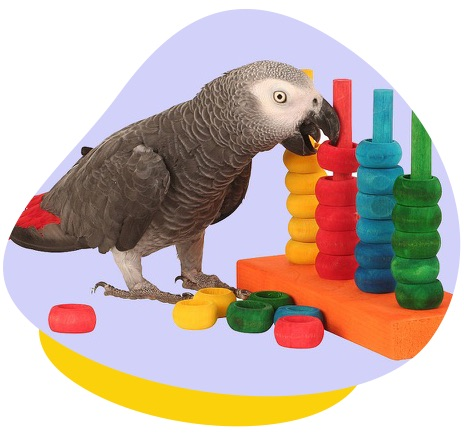 Bird playing wood toy