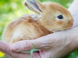 Caring for rabbits blog