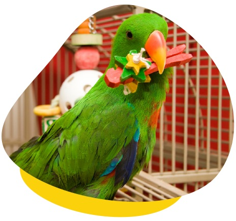Green parrot wood toy
