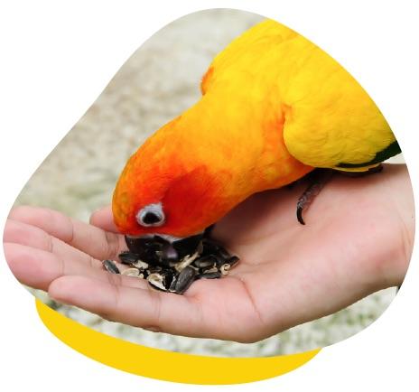 Parrot hand feeding