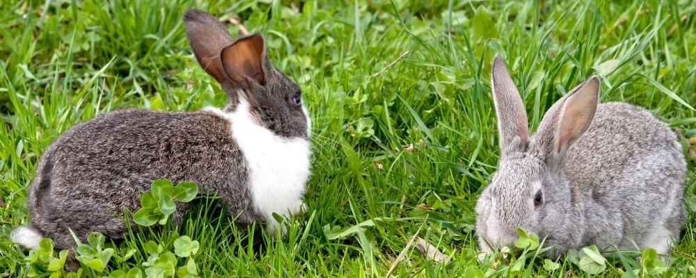 Bonding bunnies blog