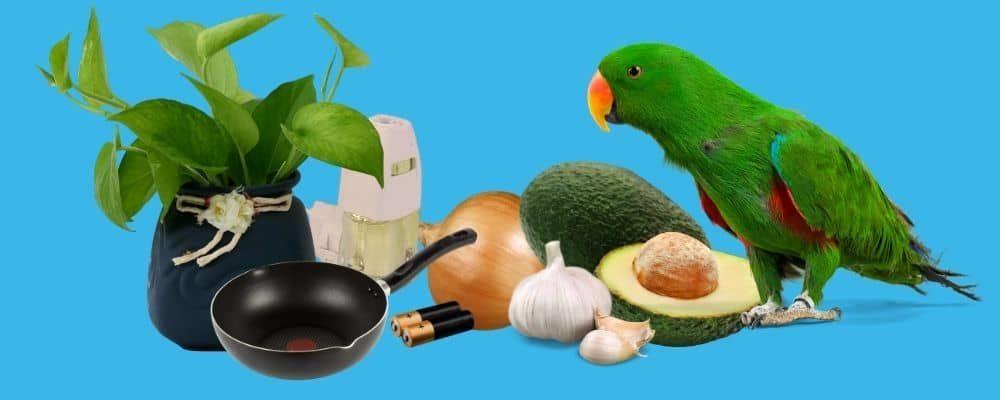 Common Household Toxics Birds