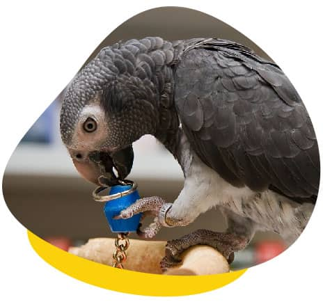 Parrot chewing bell