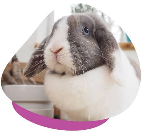 Rabbit indoors
