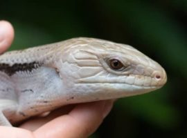 Reptile viruses blog image