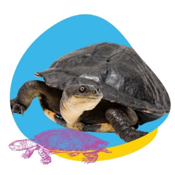 PaddleStart Package For Turtles
