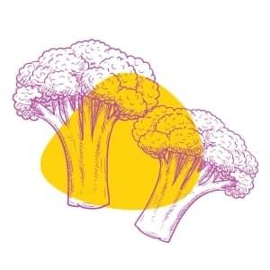 Everyday vegetables