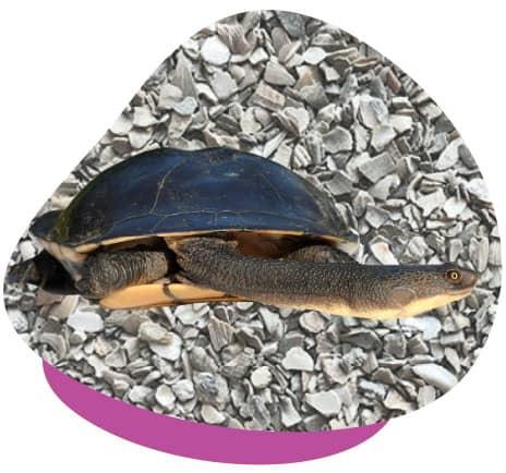 Turtle grit
