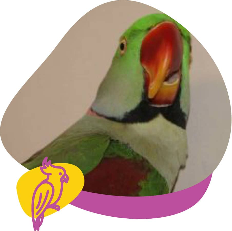 Beak Correction
