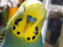 Overgrown Beak